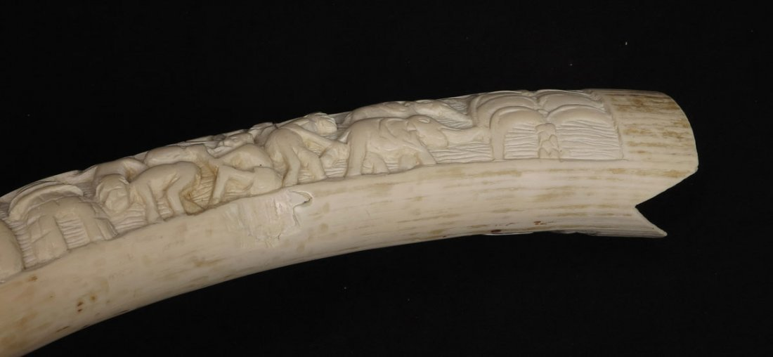 55: CARVED AFRICAN IVORY TUSK - 6