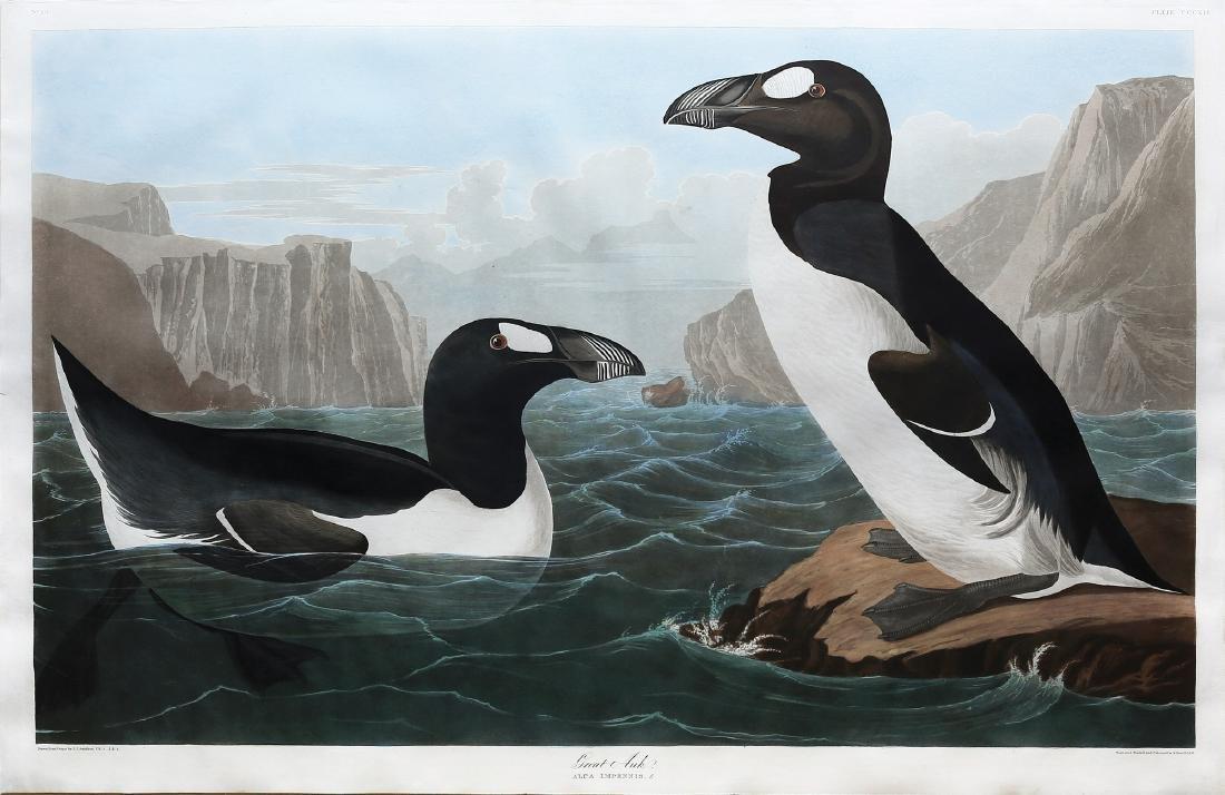 Audubon Aquatint, Great Auk
