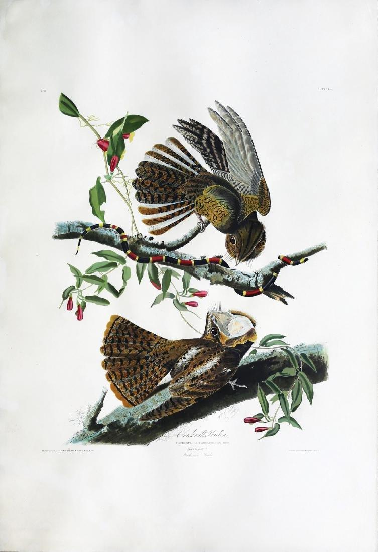 Audubon Aquatint, Chuck Will's Widow