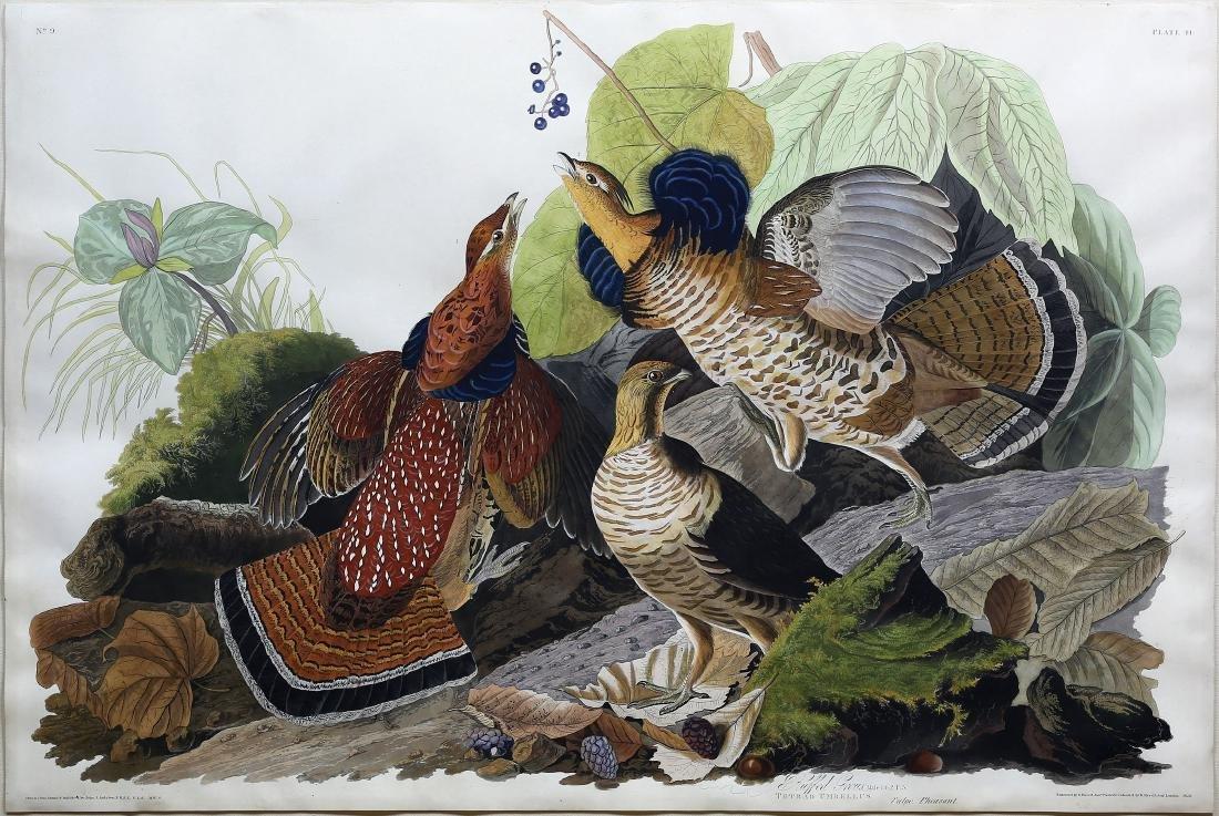 Audubon Aquatint, Ruffed Grous