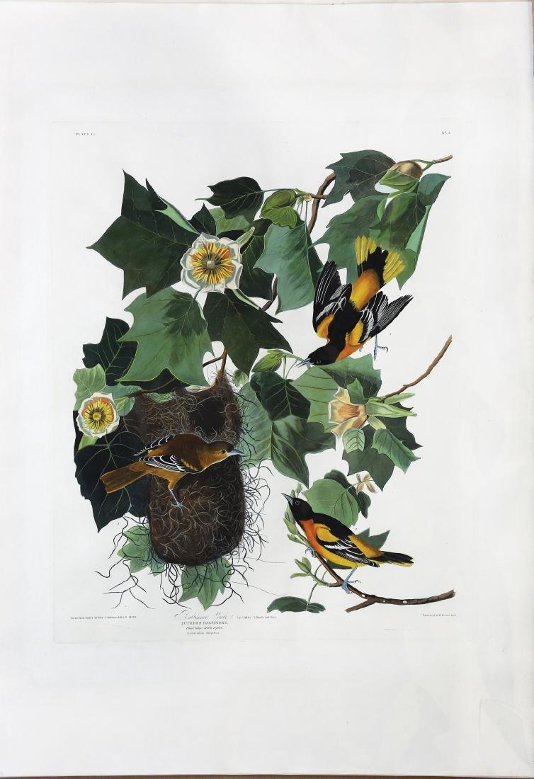 Audubon Aquatint, Baltimore Oriole