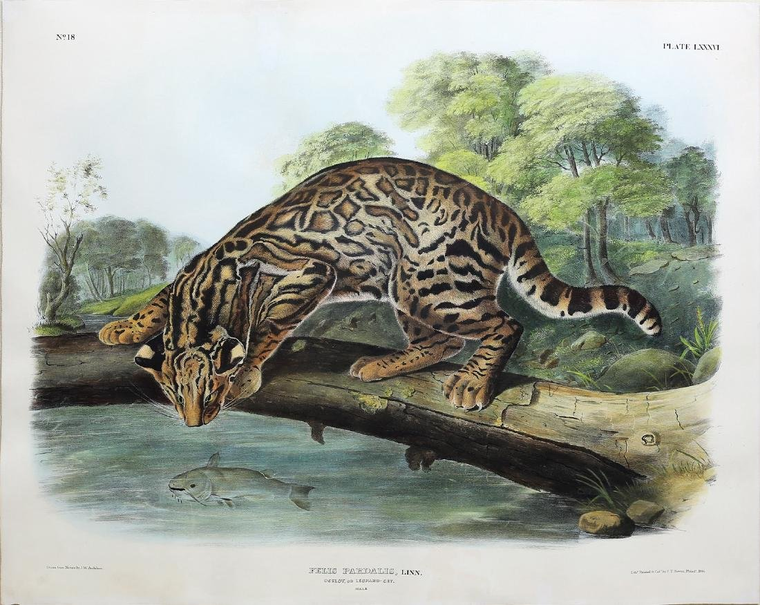 Audubon Imperial Folio Quadruped, Ocelot