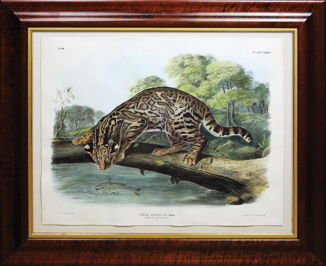 Audubon Imperial Folio Quadruped, Ocelot - 2