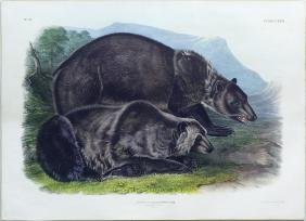 Audubon Imperial Folio Quadruped, Grizzly Bear