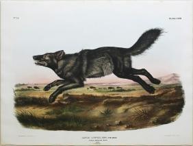 Audubon Imperial Folio Quadruped, Black American Wolf