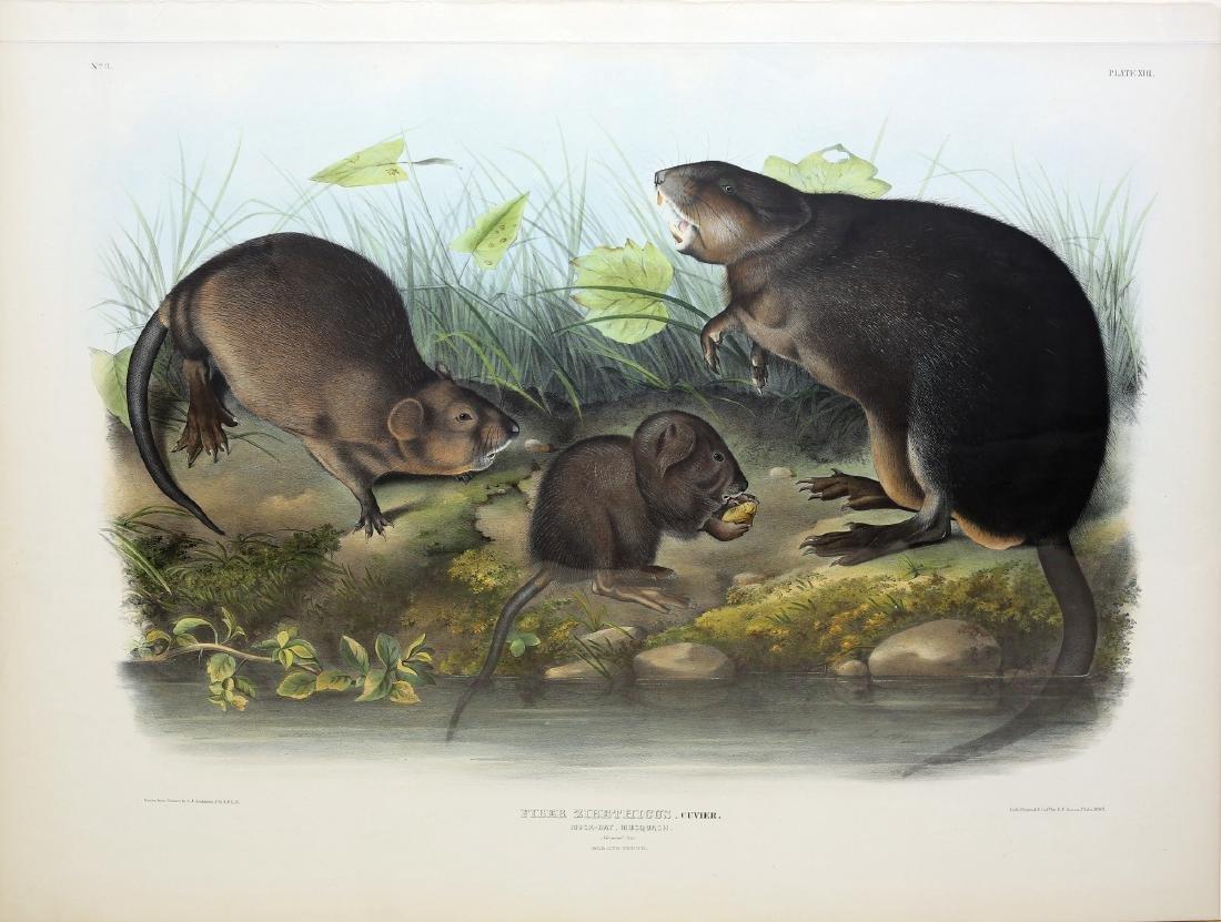 Audubon Imperial Folio Quadruped