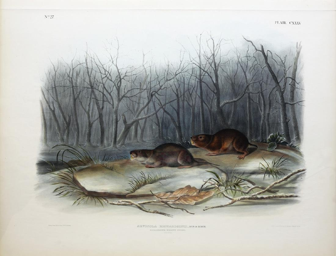 Audubon Imperial Folio Quadruped