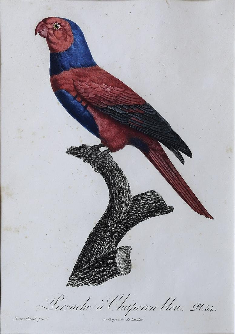 Barraband Engraving of Parrots