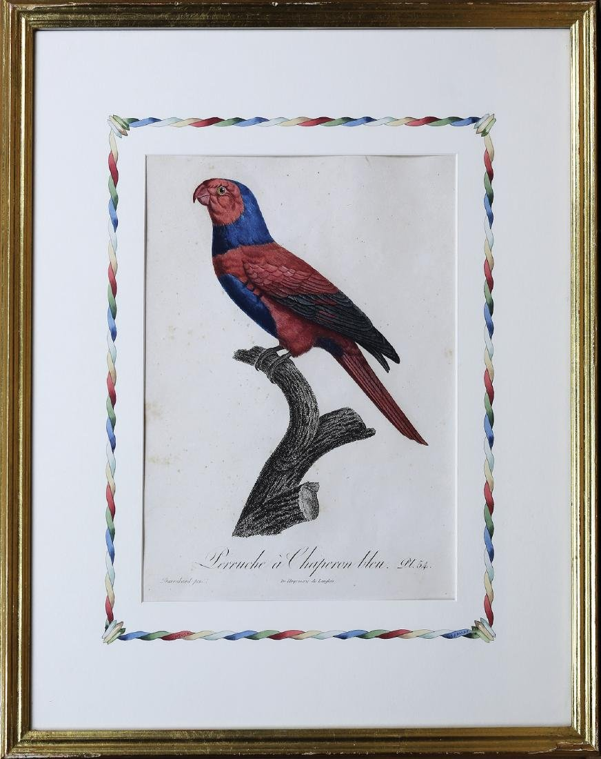 Barraband Engraving of Parrots - 2