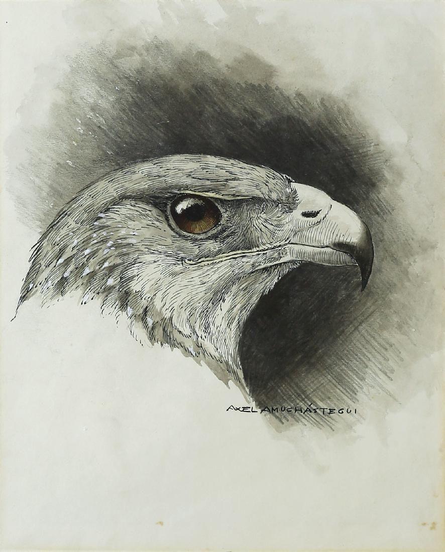 Axel Amuchastegui Watercolor of Hawk
