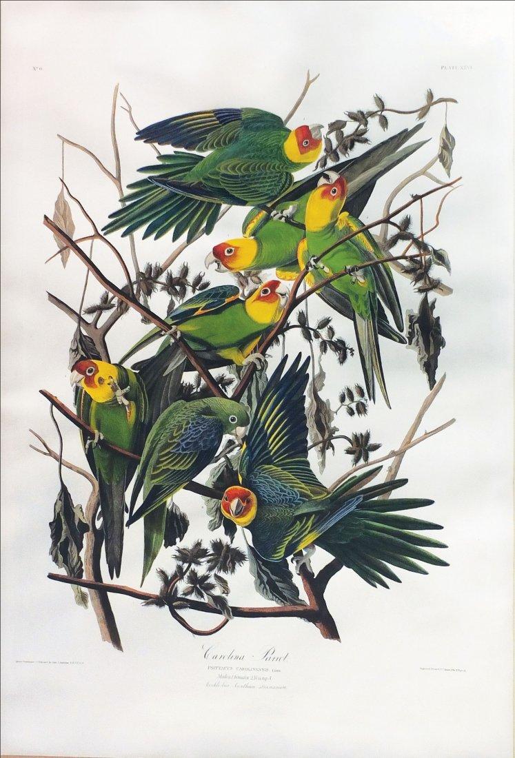 Audubon Aquatint Engraving, Carolina Parrot, Plate 26