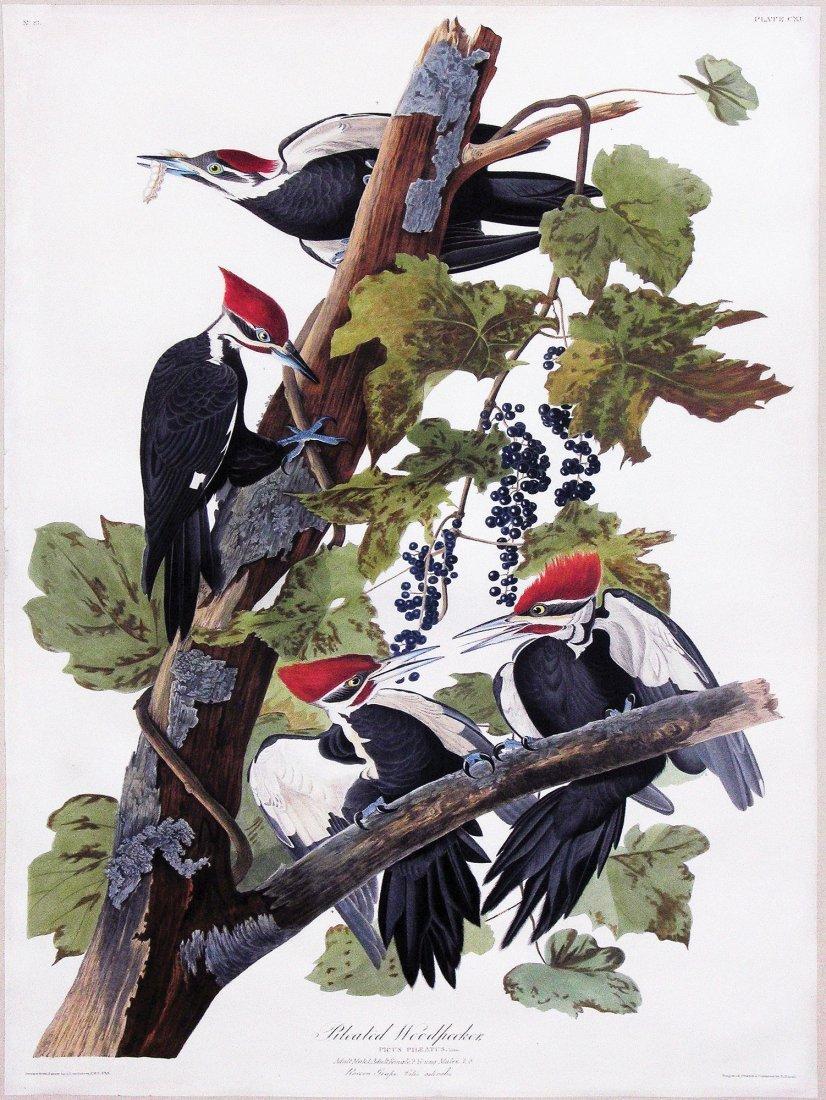 Audubon Aquatint Engraving, Pileated Woodpecker, Plate