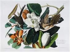 Audubon Aquatint Engraving Black-Billed Cuckoo, Plate