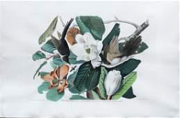 Audubon Aquatint Engraving, Black-Billed Cuckoo, Plate