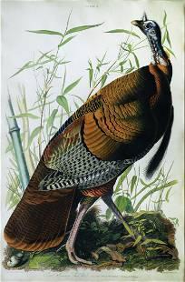 Audubon Aquatint Engraving, Male Turkey, Plate 1