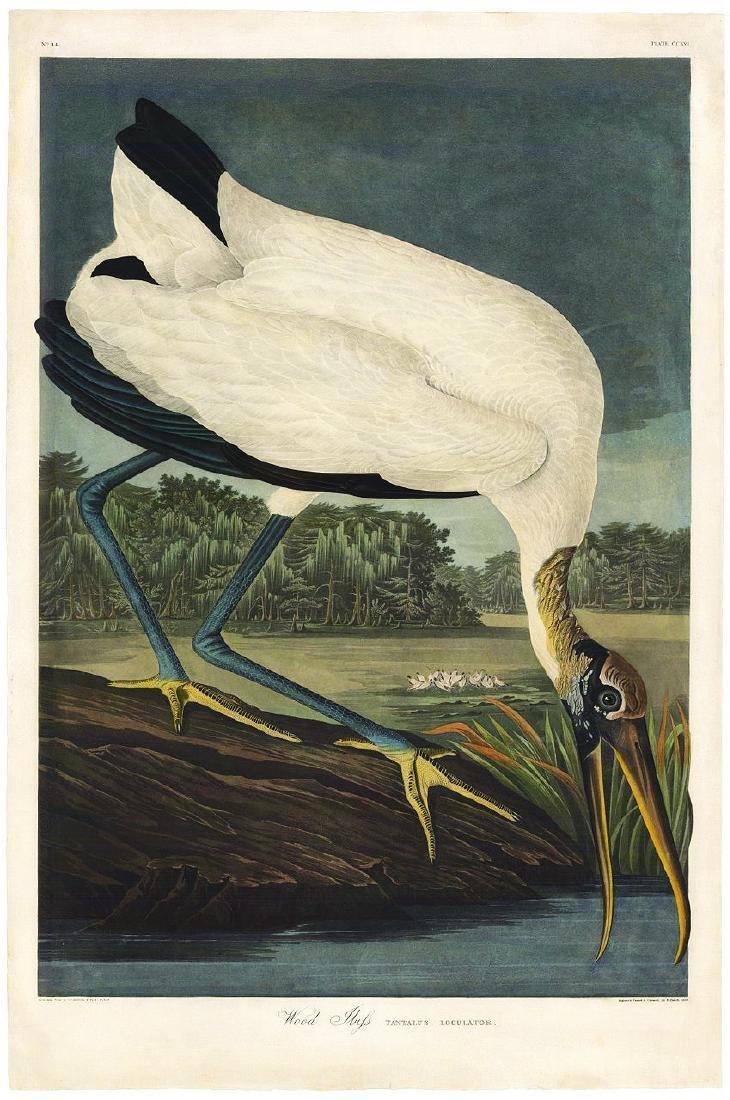 Audubon Aquatint Engraving, Wood Ibis, Plate 216