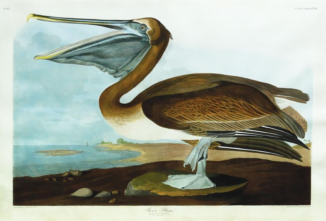 Audubon Aquatint Engraving, Brown Pelican, Plate 421
