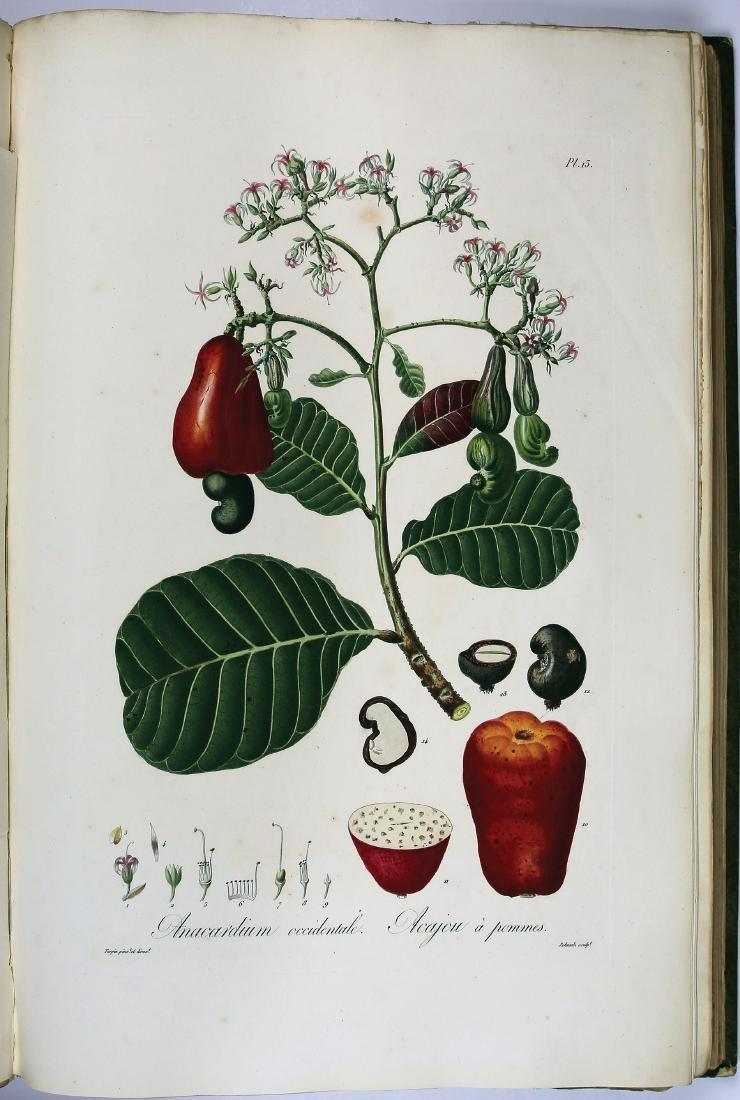 Tussac's Flore des Antilles