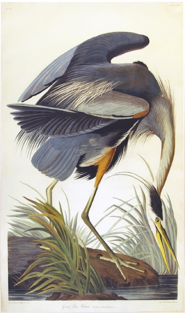 Audubon Aquatint Engraving, Great Blue Heron