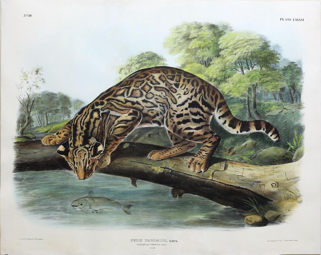 Audubon Imperial Lithograph, Ocelot