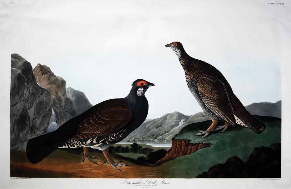 Audubon Aquatint Engraving, Dusky or Long-Tailed Grous,