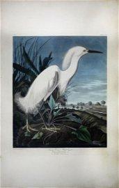 Audubon Aquatint Engraving, Snowy Heron, Plate 242
