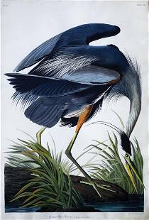 Audubon Aquatint Engraving, Great Blue Heron, Plate 211