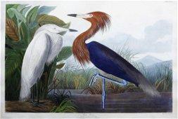Audubon Engraving, Purple Heron