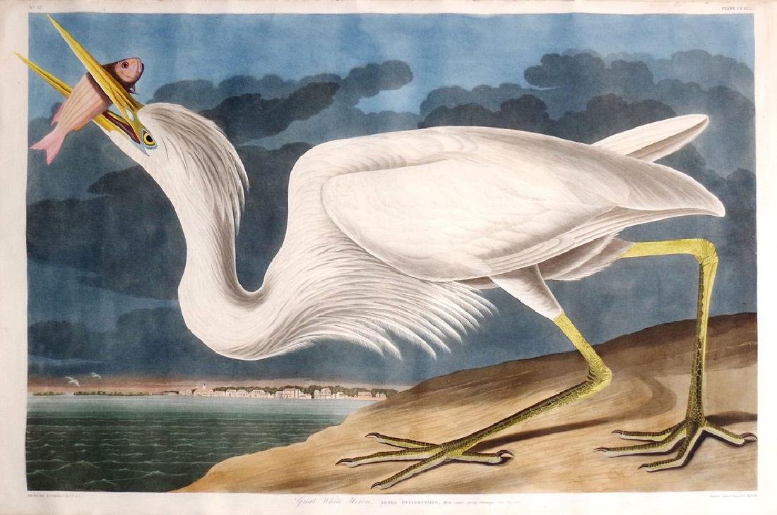 Audubon Engraving, Great White Heron
