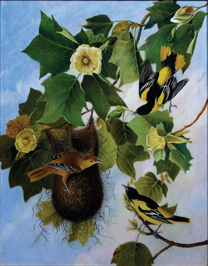 Kidd's Oil After Audubon's Baltimore Oriole