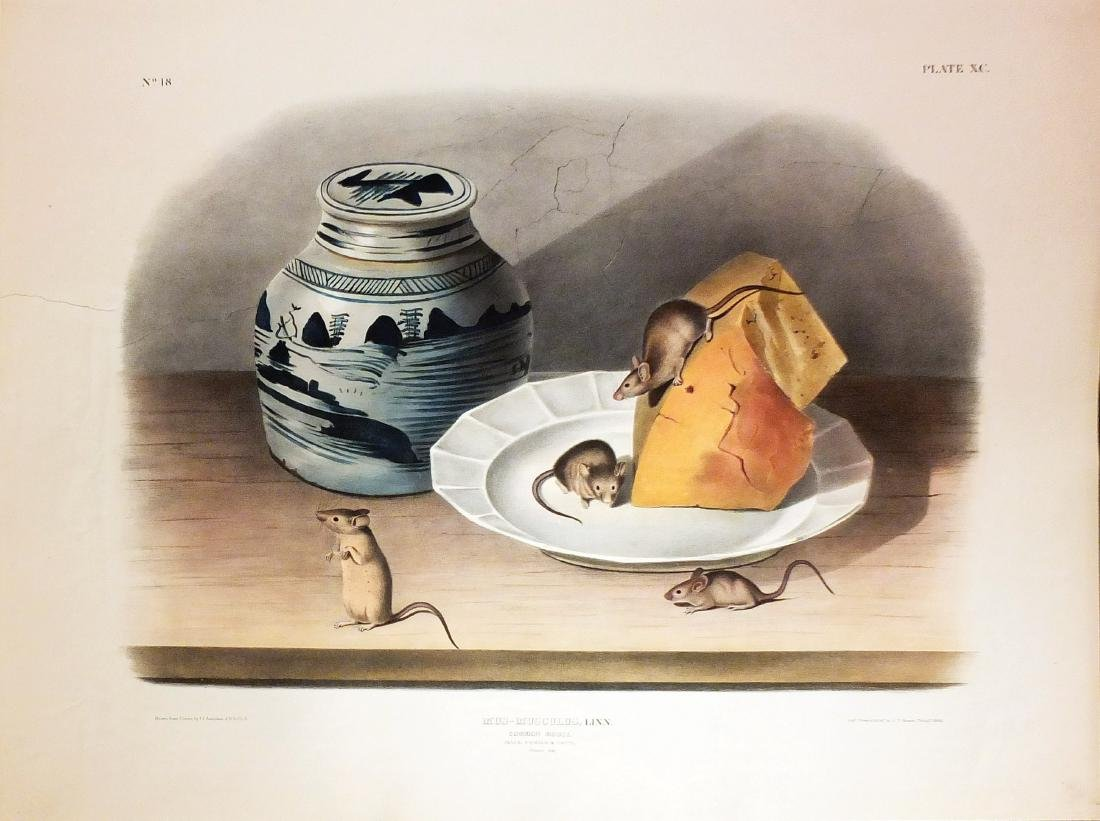 Audubon Lithograph, Common Mouse