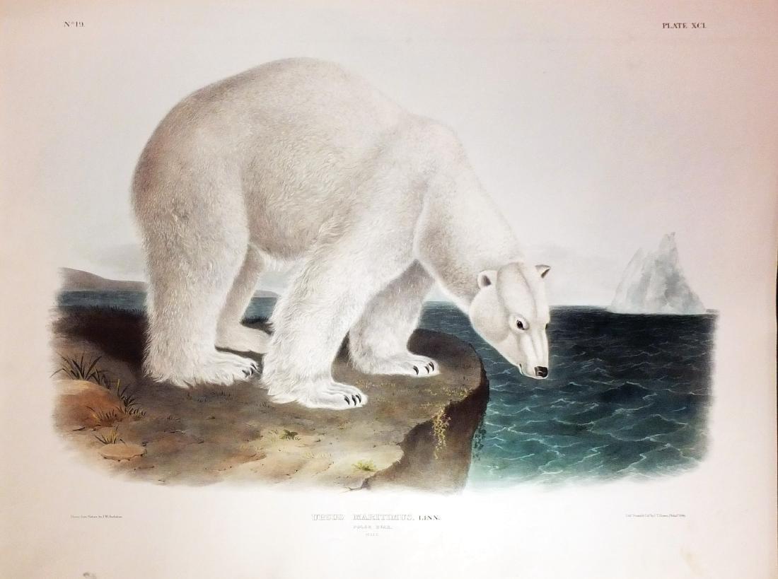 Audubon Lithograph, Polar Bear