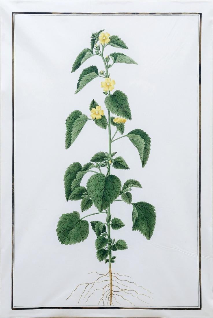 Baldassare Cattrani Flora Watercolor