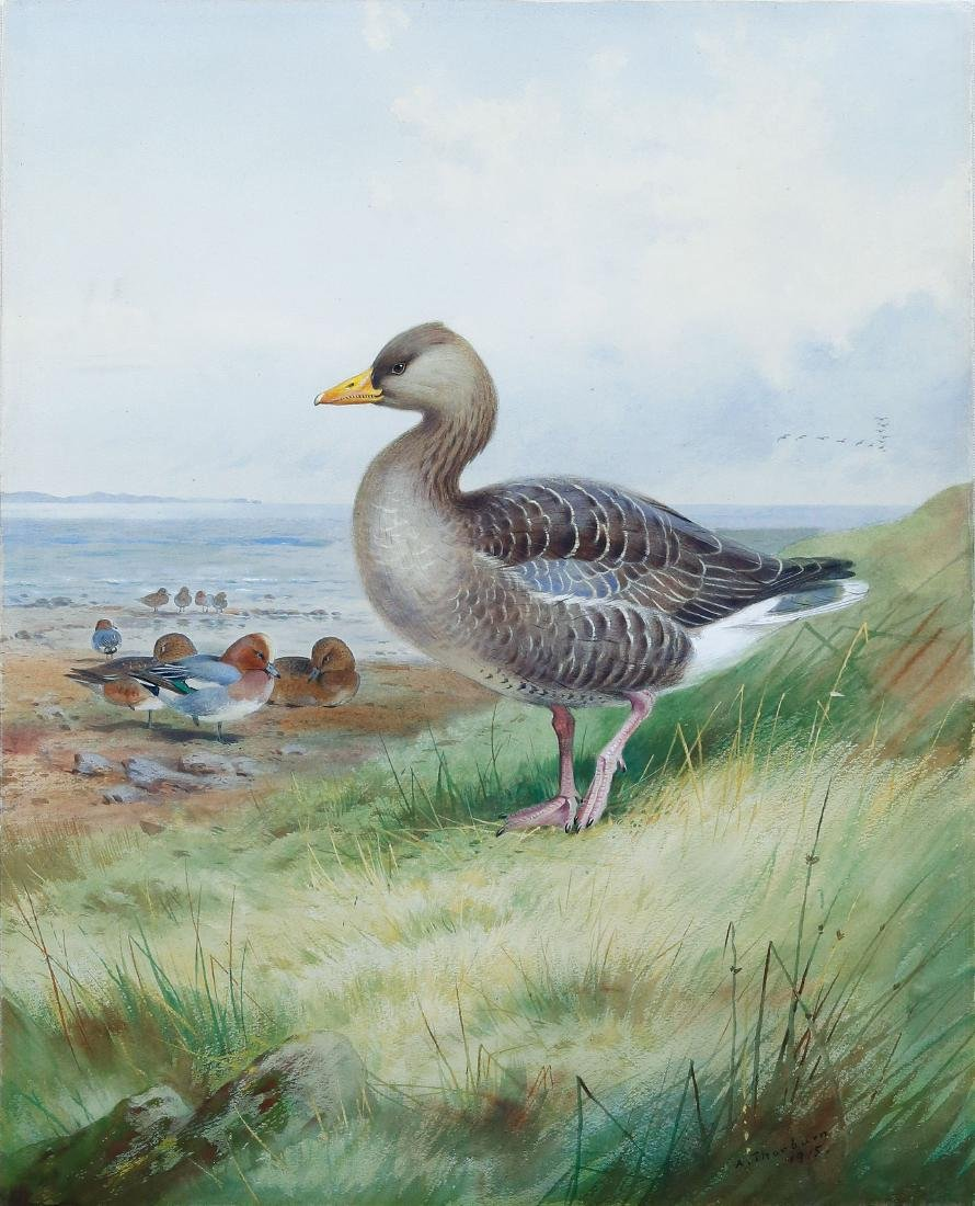 Thorburn Watercolor of Widgeon and Greyleg