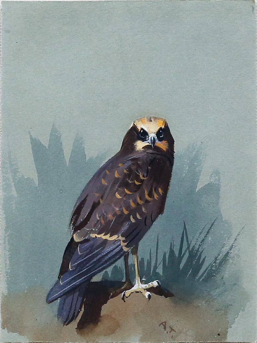 Thorburn Watercolor of Bird of Prey