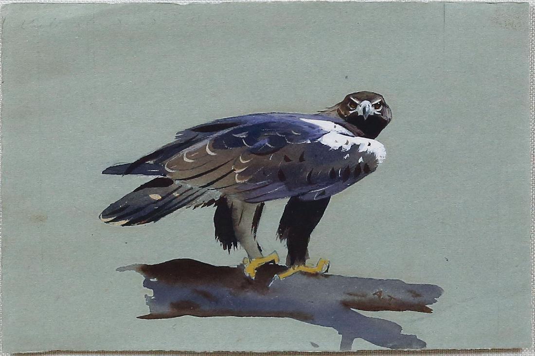 Thorburn Watercolor of Bird of Prey