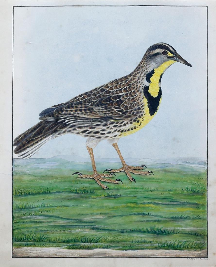 Thomas Lewin's Eastern Meadowlark Watercolor