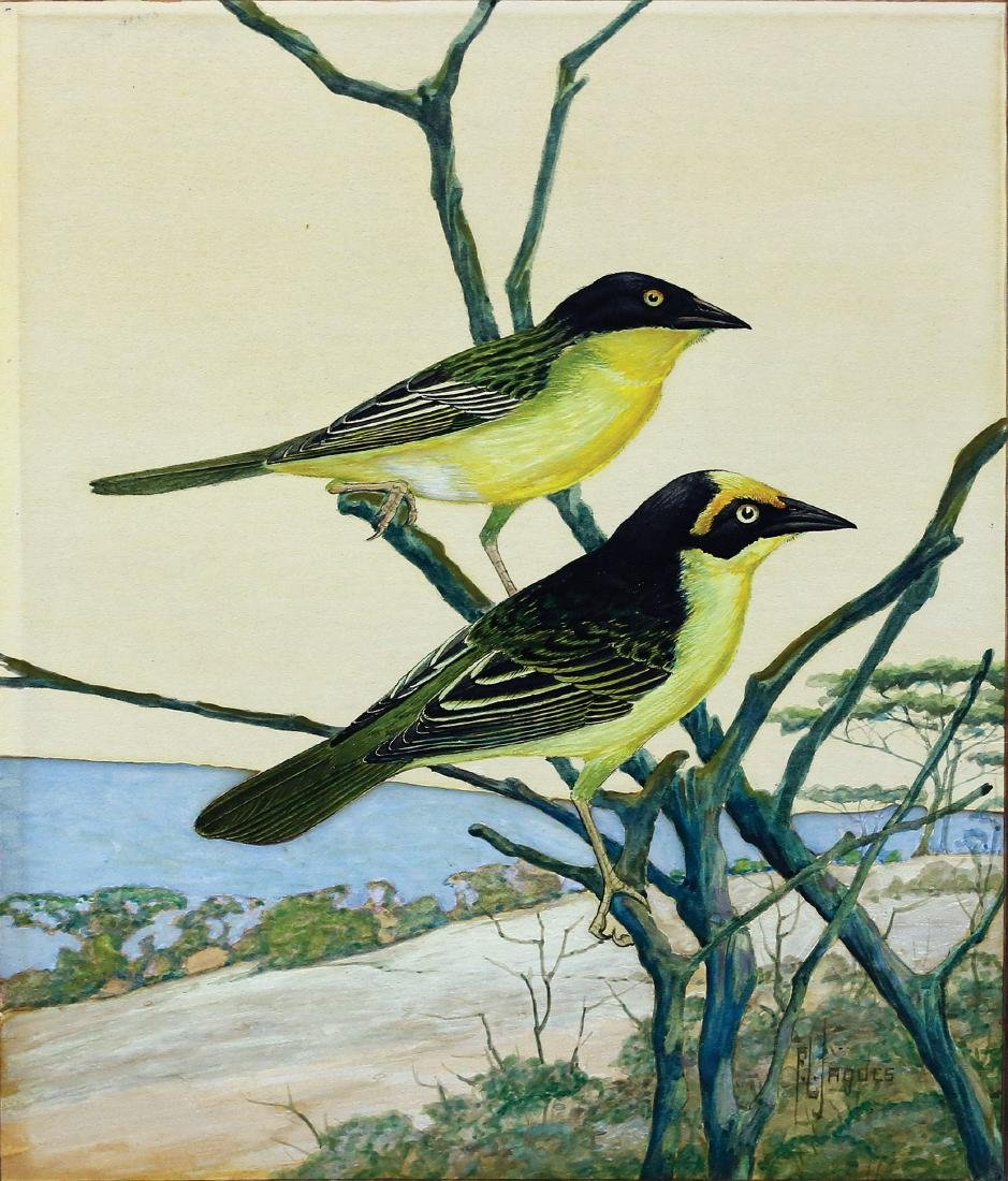 Francis Lee Jaques Watercolor of Two Orioles