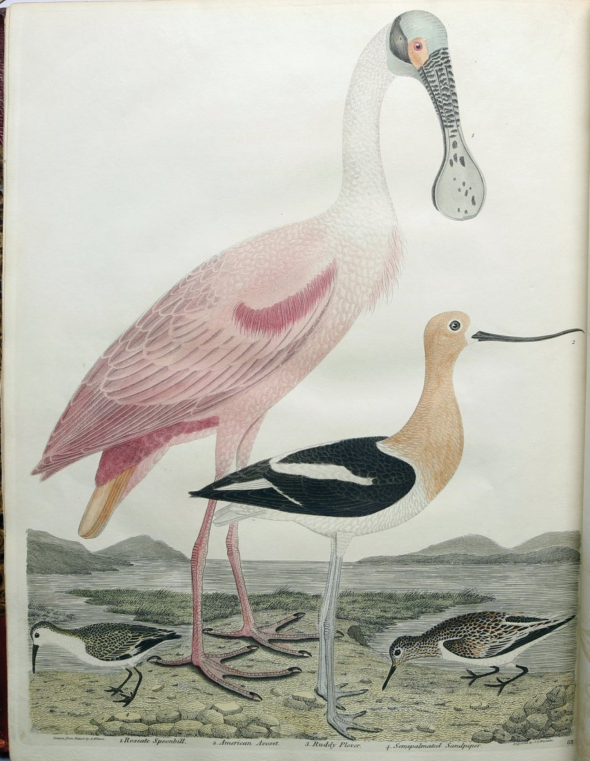 Wilson and Ord's American Ornithology