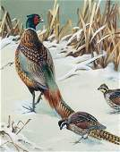 Roger Tory Peterson Pheasant and Quail