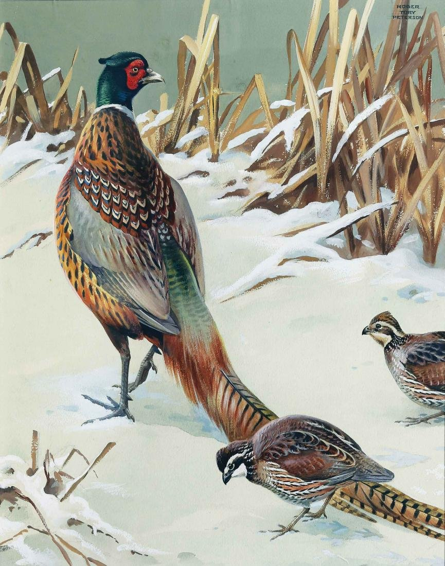 Roger Tory Peterson, Pheasant and Quail