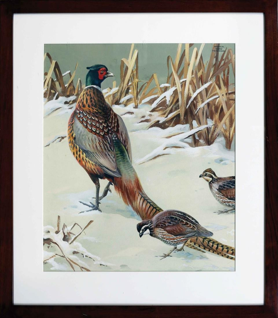 Roger Tory Peterson, Pheasant and Quail - 2