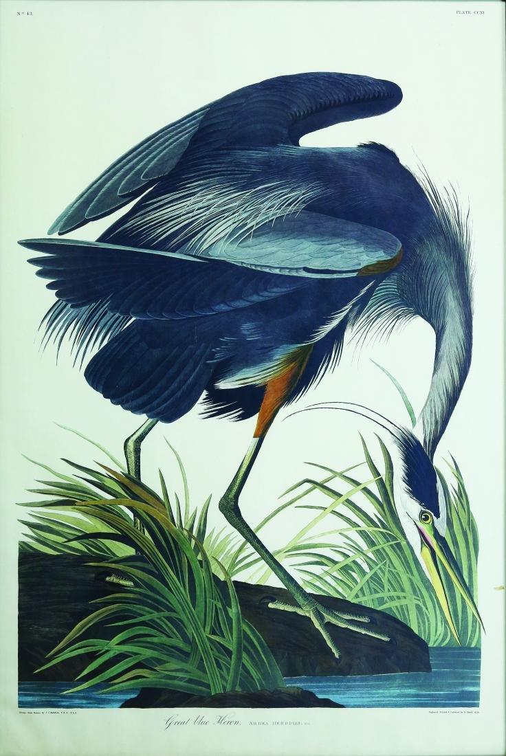 Audubon Amsterdam, Great Blue Heron