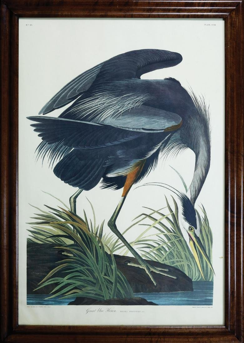 Audubon Amsterdam, Great Blue Heron - 2