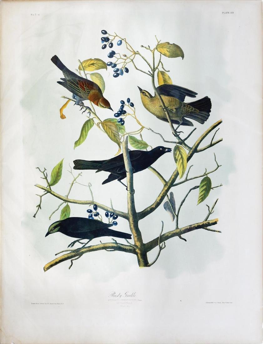 Audubon Bien, Rusty Grackle