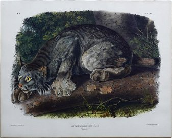 Audubon Lithograph, Canada Lynx