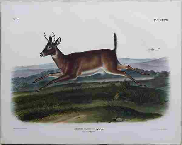 Audubon Lithograph, Long-Tailed Deer