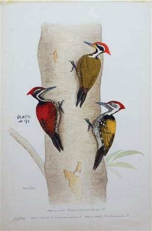 Sandstrom Watercolor Woodpeckers