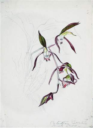 Mee Watercolor Orchid