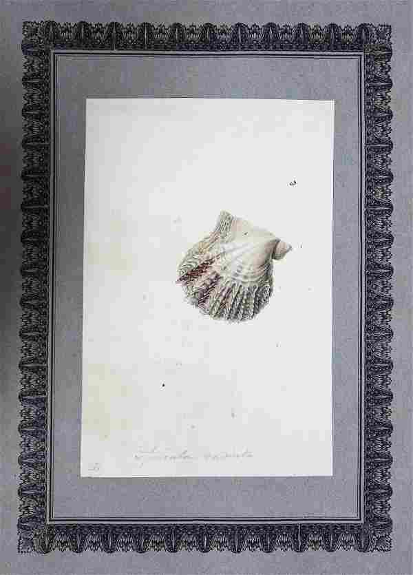 Nodder Watercolor, Shells